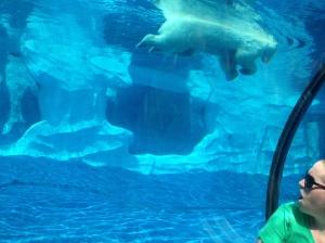 Polar Bear Swimming at Detroit Zoo