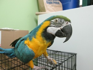 Macaw on Cage