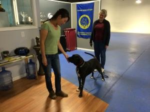 Burkey Dog Training