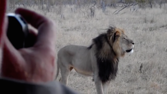 Cecil Lion Collar and Photographer